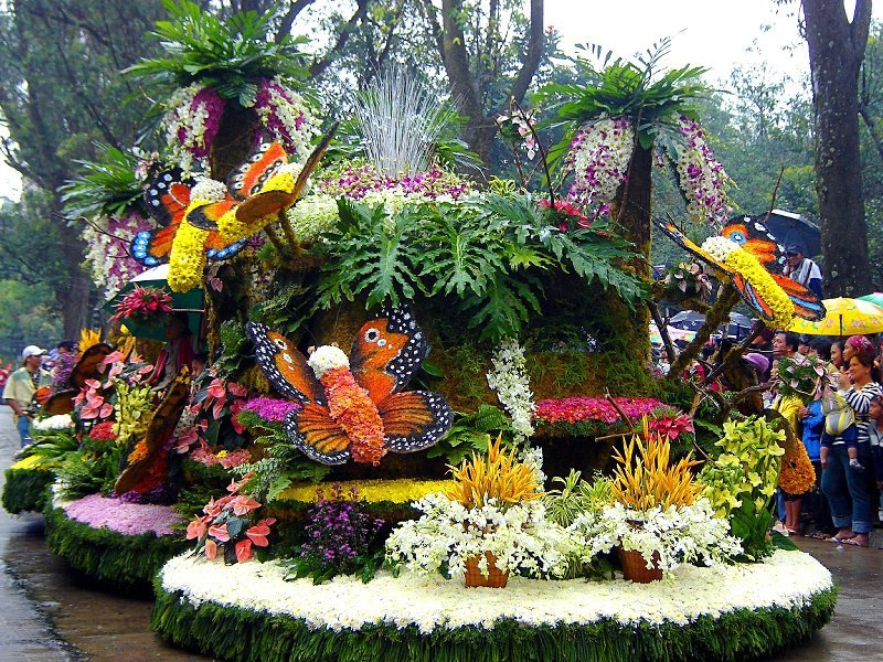 east-sikkim-tourism-places-to-visit-in-flower-festival