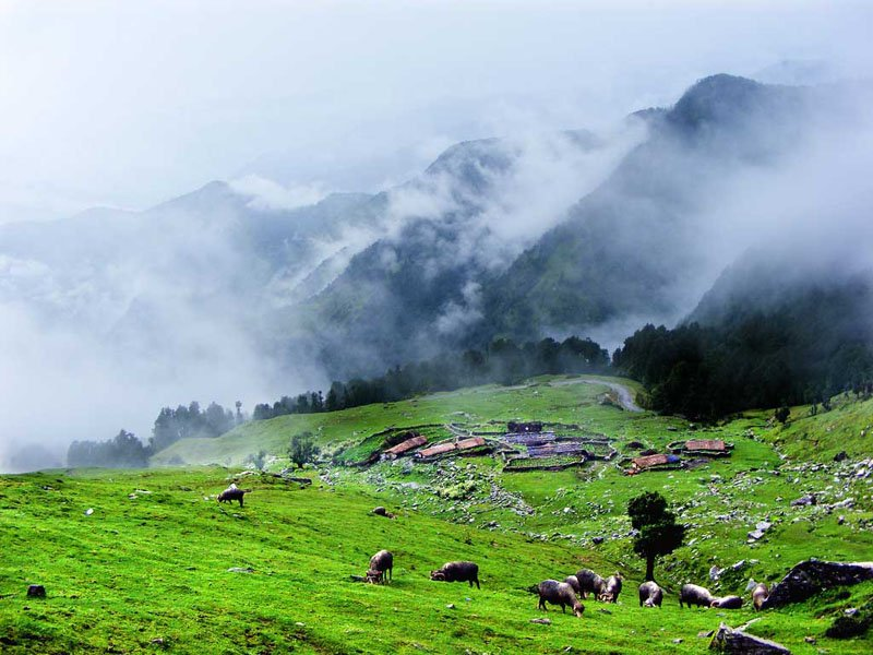 north-sikkim-tourism-places-to-visit-in-chopta-valley